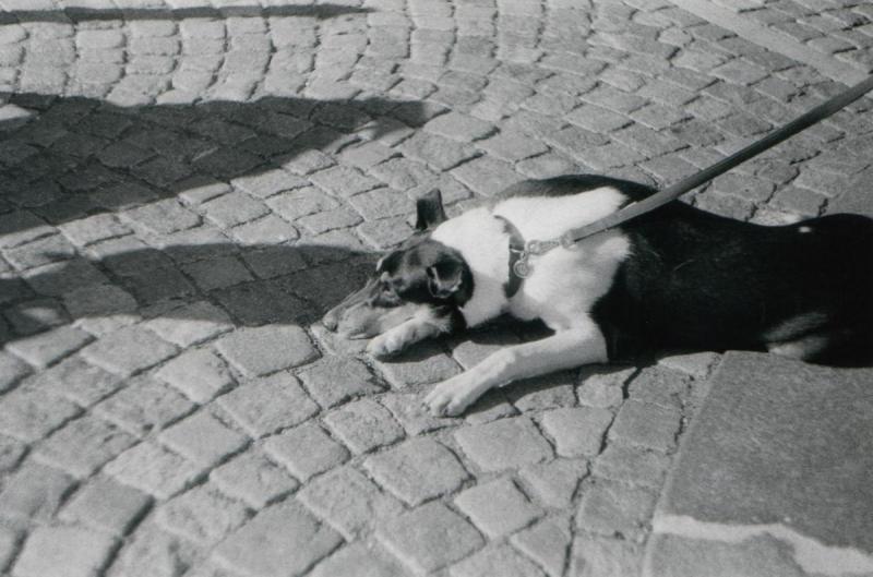 Vontské vracenky - Foglarova Stínadla v Praze  (08)